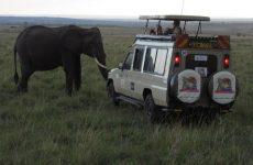 KENYA, an Africian Safari